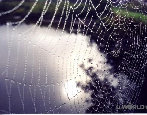 Spider Web - Vermont